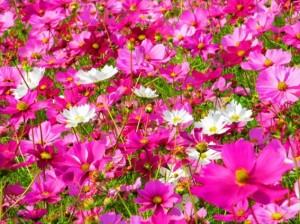 置かれた場所で咲きなさい1